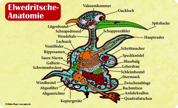 Frühstücksbrettchen Elwedritsche Anatomie