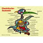 Elwedritsche Anatomie -Postkarte