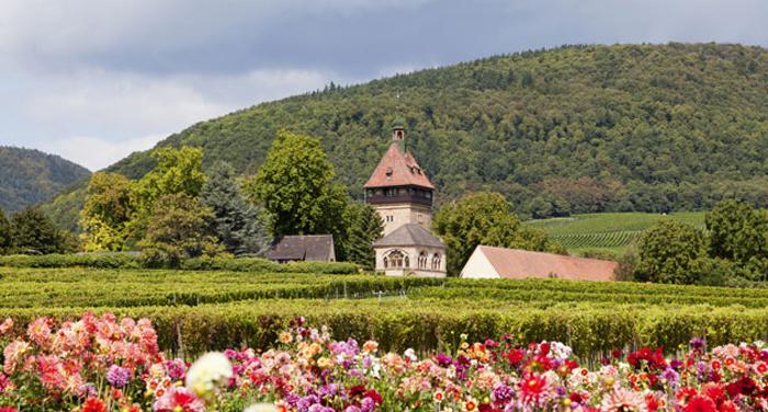 Aussicht bei einer Wanderung in der Südpfalz