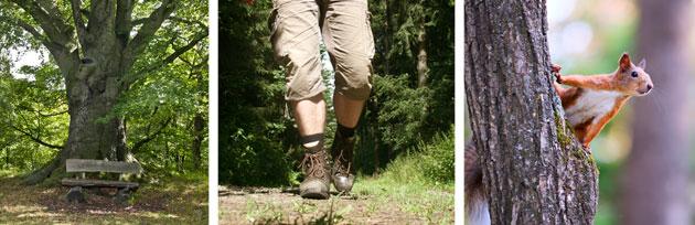 Wanderung auf den Wanderwegen am Donnersberg