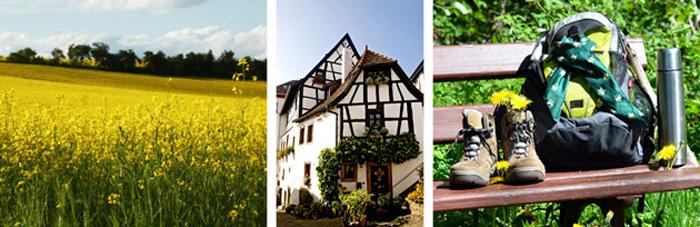 Grünstadt Wanderkarte für Wanderung auf den Wanderwegen im Stumpfwald (Leinigerland)