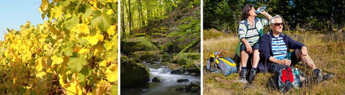 Wanderung und Wanderwege im Norden des Pfälzerwaldes